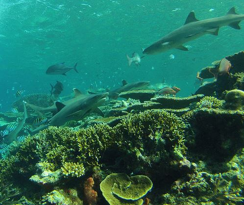Broadreach Fiji Shark School