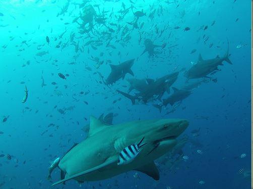 Broadreach Fiji Sharks is Hungry